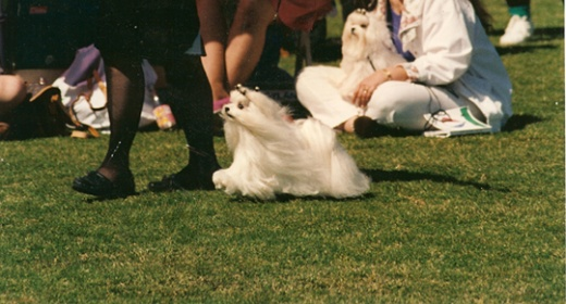 Moving conformation dog